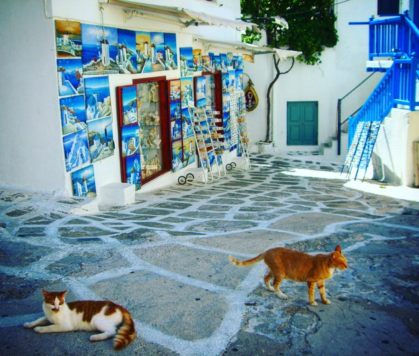 ruelles de Mikonos, chats