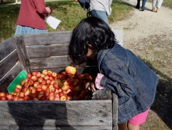 à l'entrée on vous offre des pommes !