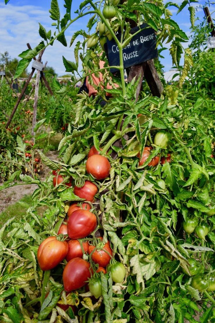 festival de la tomate et des saveurs 2018